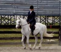 Highlight for Album: Cross Creek Welsh Ponies