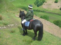 Highlight for Album: Fell Ponies on the Mary Towneley Loop - May 2007