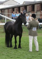 Highlight for Album: Fell Class - Great Yorkshire Show 2010