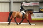 matty at the dressage