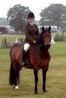Highlight for Album: Top Class M&M Ridden & WHP Ponies